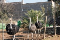 OSTRICH FARM FOR SALE WITH SOUVENIR SHOP AND HOUSE